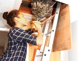 8 Expert Loft Ladder Safety Tips
